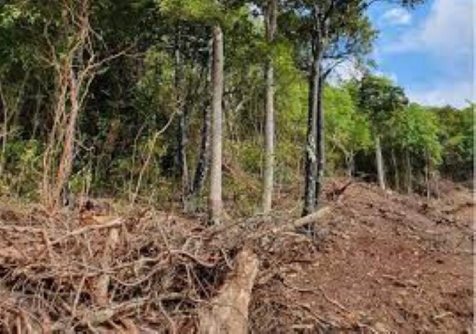 A Maurice la déforestation et la disparition d'arbres endémiques sont une réalité