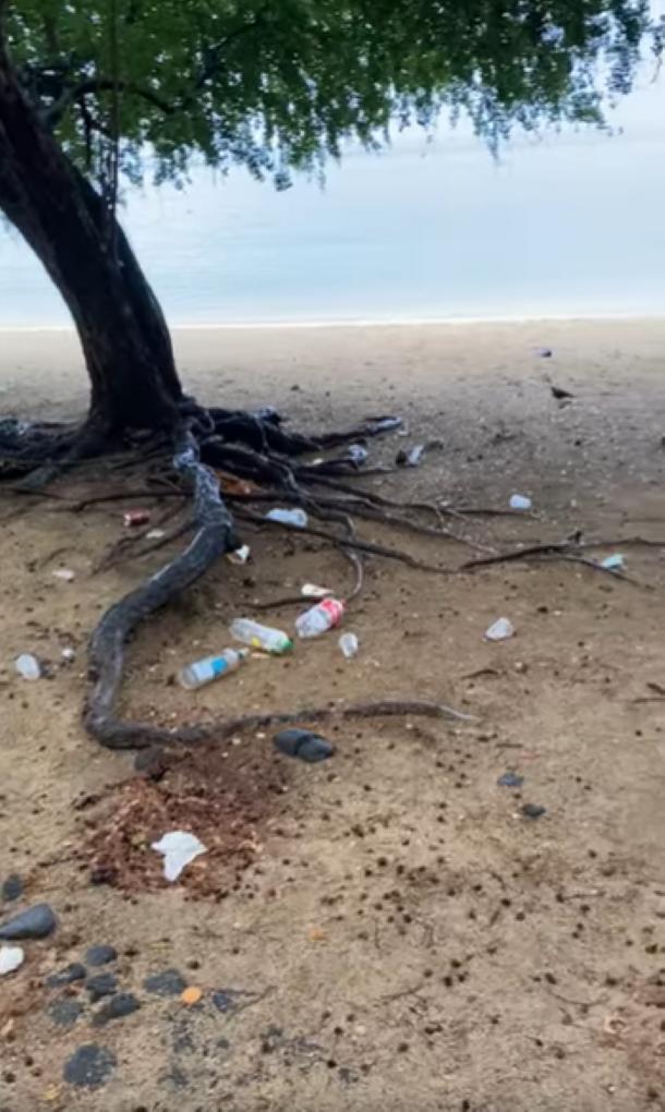 """[Vidéo] Le retour des 'sauvages"""" sur la plage d'Albion"""