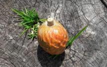 [Gael Soupe] Le premier fruit du jardin : le Coeur de Boeuf