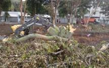 [Diaporama] MITD Phoenix Roundabout : Massacre à la tronçonneuse, la suite.