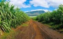 Production sucrière à la baisse : 330 000 tonnes pour 2018, au lieu des 350 000 tonnes prévues début mai.