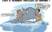 [KOK] Le dessin du jour : La baleine Mereva agacée par la présence des nageurs