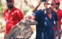 [Vidéo] Une journée à l'île aux Aigrettes avec la Mauritian Wildlife Foundation