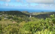Rodrigues : les cultures de maïs seront détruites
