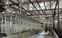 Curepipe : Un nouvel abattoir à Wooton au coût de Rs 250 millions