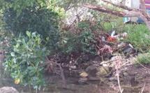 """[Diaporama] Des ordures jetées dans les mangroves à Mahébourg. """"Pourquoi se gêner?"""""""