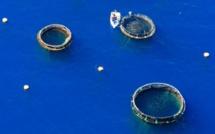 La licence du projet Growfish contestée par le tribunal de l'Environnement
