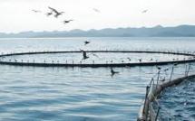 La licence du projet d'aquaculture contestée par le Tribunal de l'Environnement