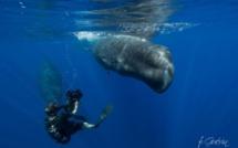 L'émission Thalassa vient à la rencontre des passionnés de la mer, de la Bretagne à l'île Maurice