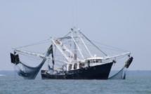 Accord de pêche Japon-Maurice : Y-a-t-il un risque pour les baleines dans les eaux mauriciennes ?