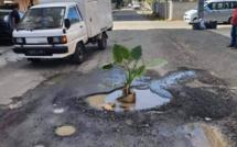 En plein milieu de la route...une plante !