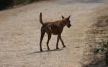 De quoi sont mort 10 chiens à Terre-Rouge ?
