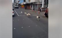 ▶️ En plein centre ville de Rose-Hill. De quoi vous rendre chèvre...