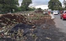 ▶️ Metro express : Joanna Bérenger réclame l'EIA après le massacre d'arbres centenaires