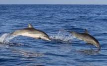 90% des dauphins de l'océan Indien en grand danger par l'industrie de la pêche