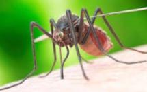 La dengue provoque des comportements dingues