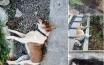 A Mesnil, 34 chiens retrouvés morts dans des circonstances suspectes