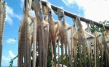 Fermeture de la pêche à l'ourite le 28 janvier à Rodrigues