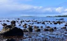 Eco-Sud évoque 45 personnes affectées par la marée noire sur le plan de la santé