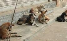 Des défis de taille pour le contrôle des populations de chiens errants à l'île Maurice