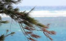 Covid-19 : L'île Maurice vers un demi-confinement