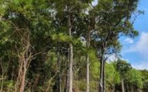 [Vidéo] Les conséquences de la déforestation sauvage balayées d'un revers de la main par Kavi Ramano